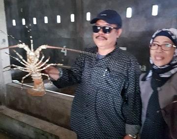 Lobster kurtubi