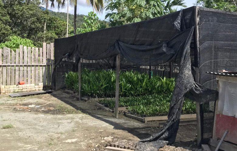 membrano mangrouve