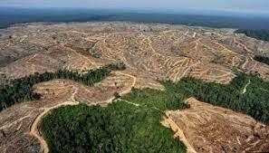 Hutan Rusak